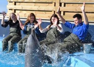 Ontmoet de dolfijnen in Dolfinarium Harderwijk
