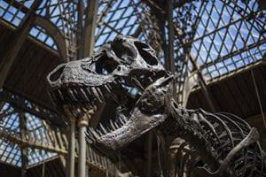 T-rex skelet in het Oxford museum of natural history