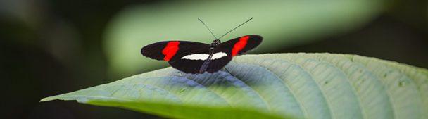 Vlinder in de vlindertuin van Diergaarde Blijdorp