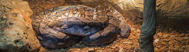 Boa constrictor in Dierenpark de Oliemeulen