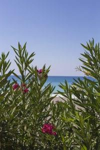 Foto van bloemen voor de zee in Turkije