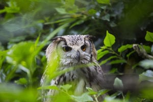 Uil in diergaarde blijdorp gefotografeerd door een hekwerk
