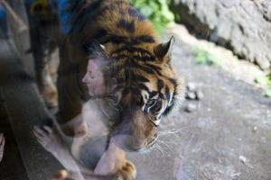 Weerspiegeling in het glas bij fotograferen in de dierentuin