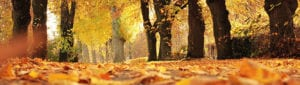 Herfsbladeren tijdens herfstdepressie