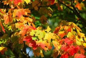Herfstkleuren op de bladeren