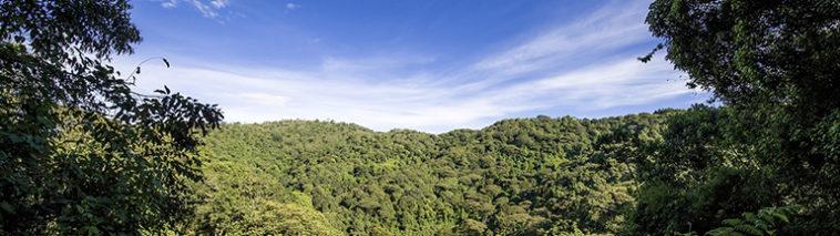 Uitzicht over het landschap van Oeganda