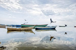 Vogels op boten in Oeganda