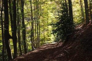 Natuurgebied Monteseny