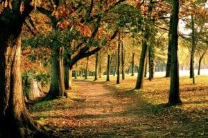 Park in Nantes