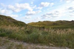 De duinen van Texel