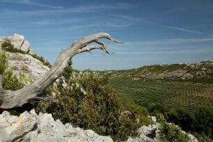 Natuurgebied de Alpilles