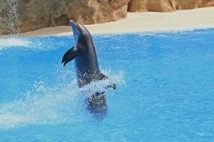 Dolfijn in Dolfinarium Harderwijk
