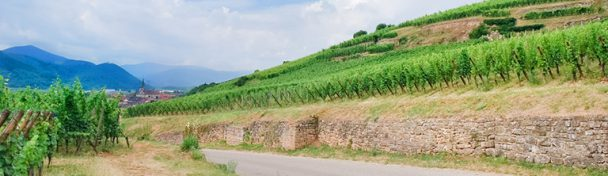 Wijnroute frankrijk